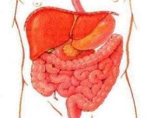 Кишечным бактериям принадлежит ключевая роль в наборе веса