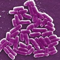 Эксперты встревожены ростом устойчивых к антибиотикам инфекций