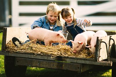 FDA хочет ограничить использование антибиотиков для сельскохозяйственных животных