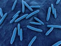 Обнаружены устойчивые к антибиотикам древние бактерии
