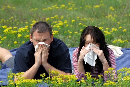 Близость лесных массивов защищает от аллергии