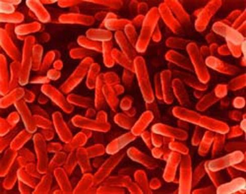Уникальное антибактериальное покрытие убивает 99% насекомых и бактерий