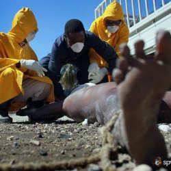 Холера – причины, приводящие к инфекции
