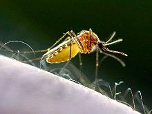 Контрафакт помогает распространяться малярии