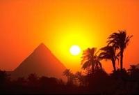 Птичий грипп – ситуация в Египте