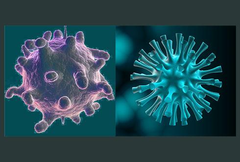 Растения спасут нас от гриппа