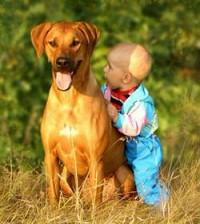 Собаки могут защитить детей от некоторых инфекций