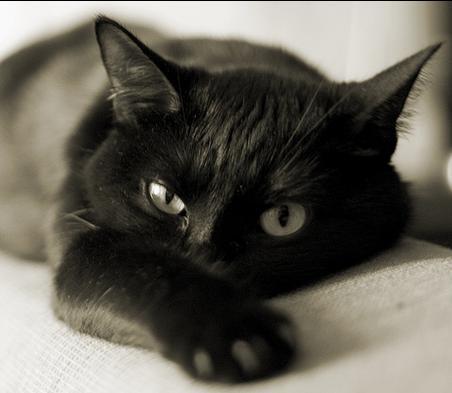 Инфекция, передающаяся кошками, может быть причиной самоубийств у женщин