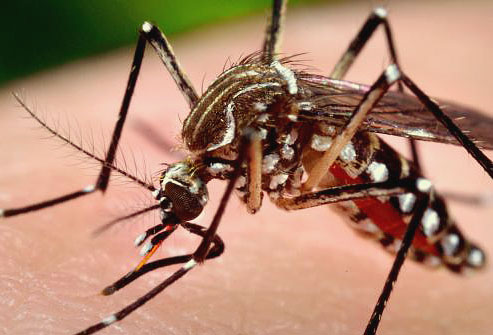 Малярию можно подхватить и в аэропорту