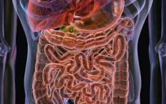 Дисбактериоз: симптом или диагноз?