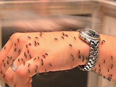 Малярийных паразитов вакцины делают более агрессивными и опасными