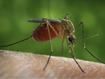Более 40 жителей Астраханской области заболели лихорадкой Западного Нила с начала июля