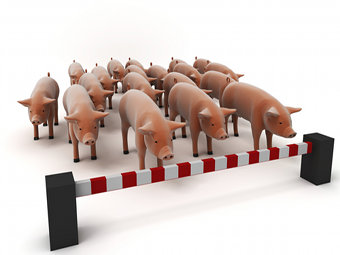 У нового вируса свиного гриппа обнаружили потенциально смертоносные мутации