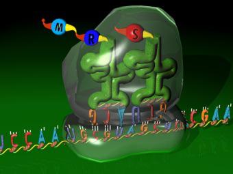 Универсальная вакцина против гриппа создана на основе РНК