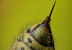 Оружие против СПИДа — пчелиный яд и наночастицы