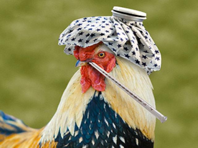 Новый штамм гриппа может проще передаваться от птиц к людям
