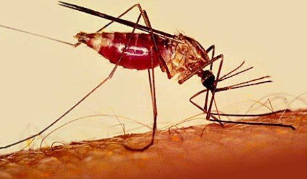 25 апреля День борьбы с малярией