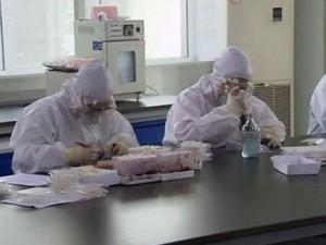 В Китае скрестили вирусы свиного и птичьего гриппа