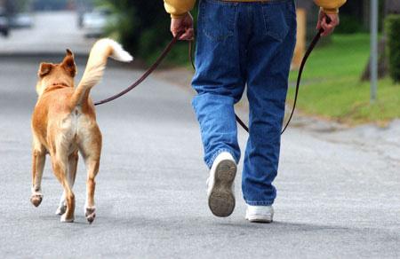 Прогулка с питомцем – лучшее лекарство от недугов