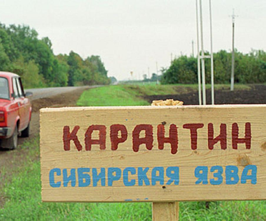 Двое ставропольцев заразились сибирской язвой