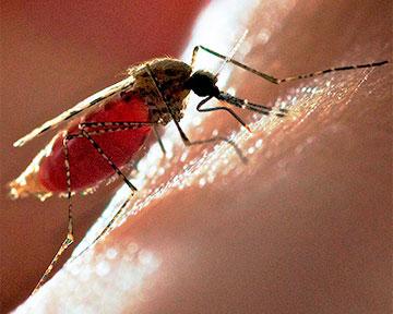 Вакцина от малярии успешно миновала испытания