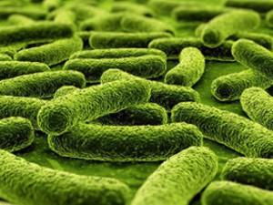 Определены генетические истоки лекарственной устойчивости туберкулеза