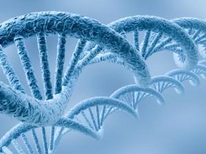 Тест на отцовство с помощью анализа ДНК