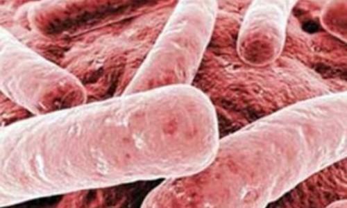 Европу наводнили устойчивые к карбапенемам бактерии