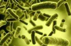 Цинковый гроб для опасных бактерий: еще одна победа над инфекциями