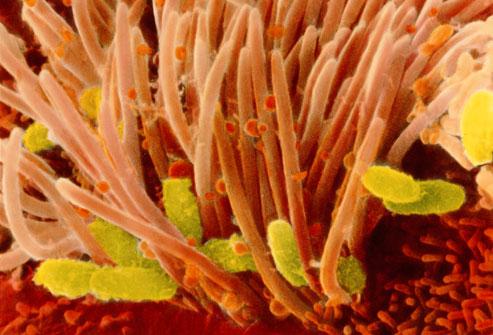 Вакцина от коклюша должна предотвращать передачу инфекции