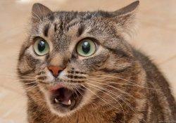 Франция: искусав людей, котенок погиб от бешенства