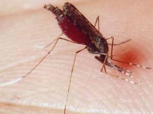 В Челябинскую область привезли малярию