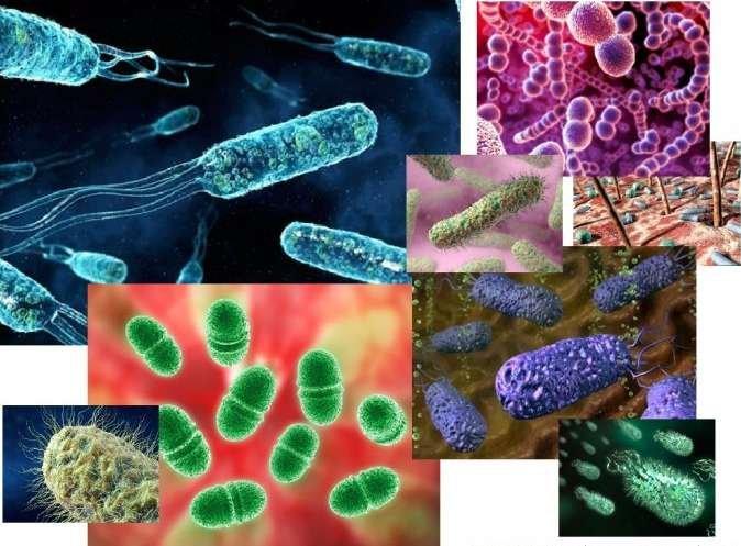 Бактерии, как причина инфекционных болезней