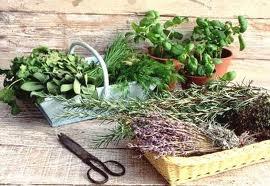 Каким травам можно доверить свое здоровье?