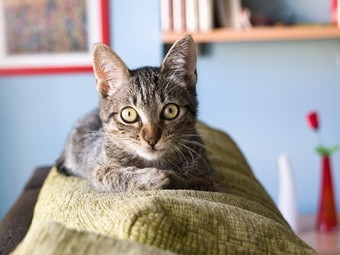 Домашние кошки заразили туберкулезом двух британцев