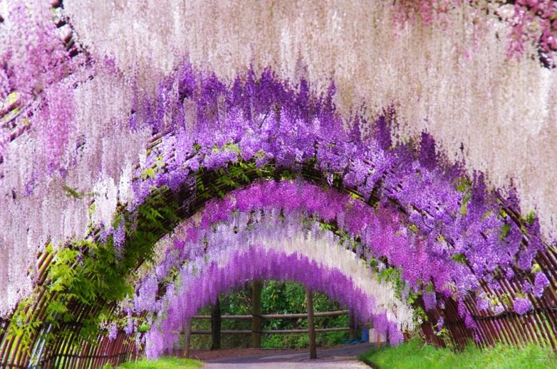 Сад цветов в Японии