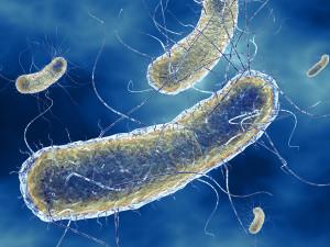 Неуязвимость E.coli – вопрос времени