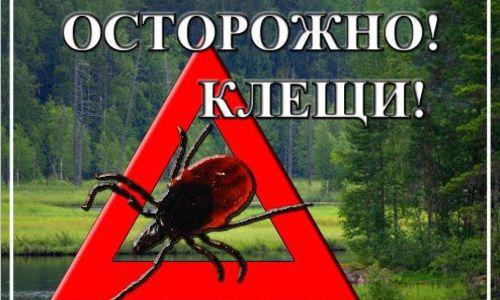В 2014 году жители Кемеровской, Новосибирской областей и Красноярского края в два раза активнее страхуются на случай укуса клеща