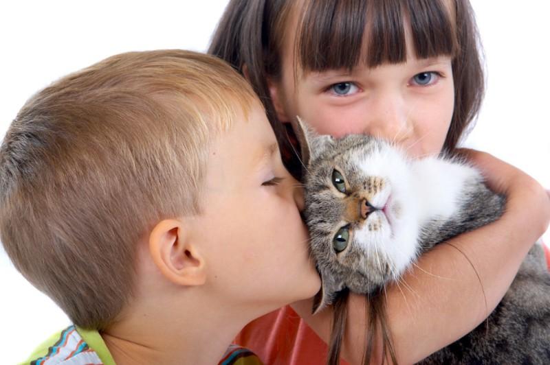 Менингит: переносчиками могут быть кошки