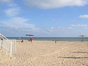 Патрульные собаки на пляжах способствуют снижению количества береговых инфекций