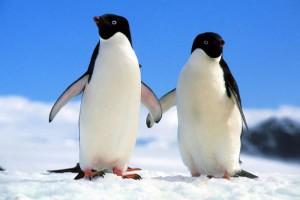 Птичий грипп обнаружили в Антарктиде