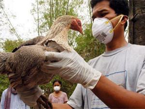 В Китае от нового штамма птичьего гриппа умер мужчина