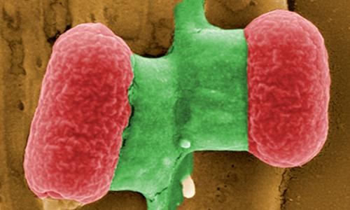 Микробы научились спасаться от антибиотиков в «спячке»