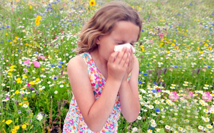 Аллергия. Мифы и вся правда о поллинозе