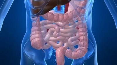 ГПОД: разновидности, причины формирования и особенности развития грыжи пищевода