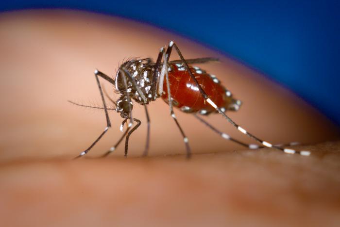 В Японии зафиксирована вспышка лихорадки денге