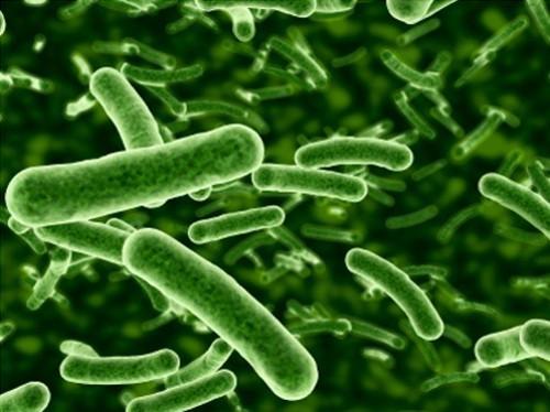 Диагноз на скорость: созданы экспресс-тесты бактериальных инфекций