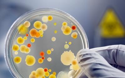 В США разработан тест для выявления возбудителей грибковой инфекции в крови