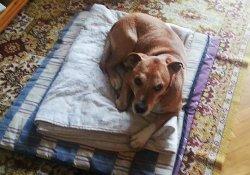 Защитники животных требуют отставки министра за «умерщвление» собаки