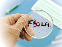 Российские ученые проверят эффективность своего лекарства против Эбола
